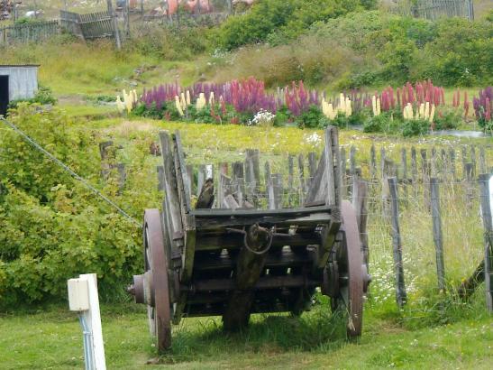 Jardins de la Estancia Haberton  al sud de Ushuaia. Tierra del Fuego