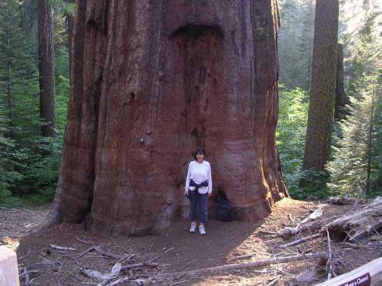 Núria fent de referència davant d'una sequoya al Yosemite National Park. Califòrnia