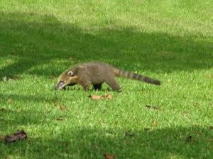 Flora i fauna al PN IGUAZÚ