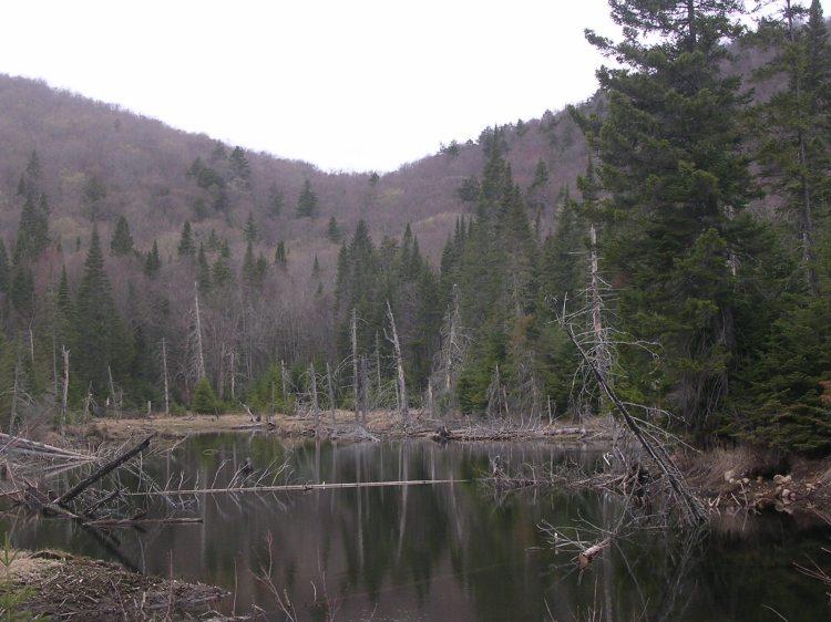 Parc Nacional del Mont Tremblant. Quebec