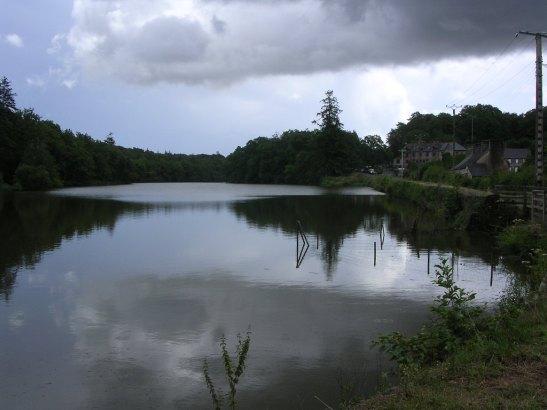 Bosc de Paimpont. Bretanya / Paimpont Forest. Bretagne