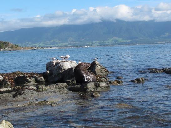 Costa de Kaikoura a la illa sud de Nova Zelanda