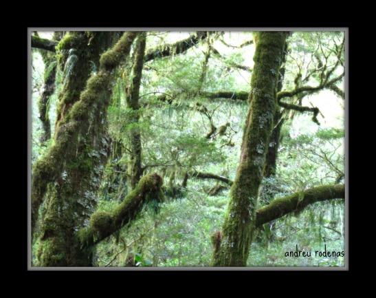 Bosc Primari. Milford Road. Illa Sud de Nova Zelanda