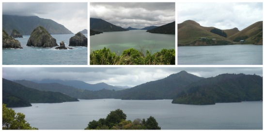 Malborough Sound. Illa Sud de Nova Zelanda/ South Island, New Zealand