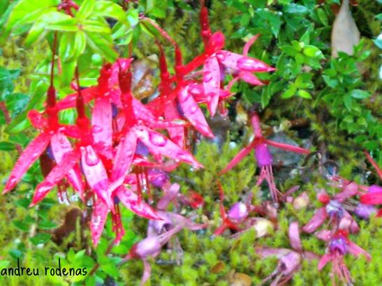 Parque Nacional Bernardo O'Higgins. Xile / Bernardo O'Higgins National Park. Chile