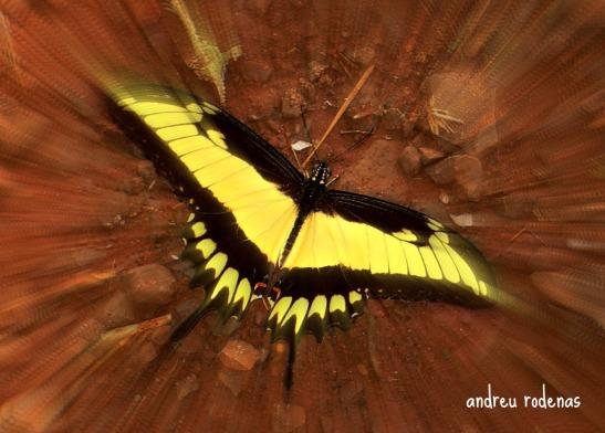Papallona. Parque Nacional Iguazú / Butterfly Iguazu National Park
