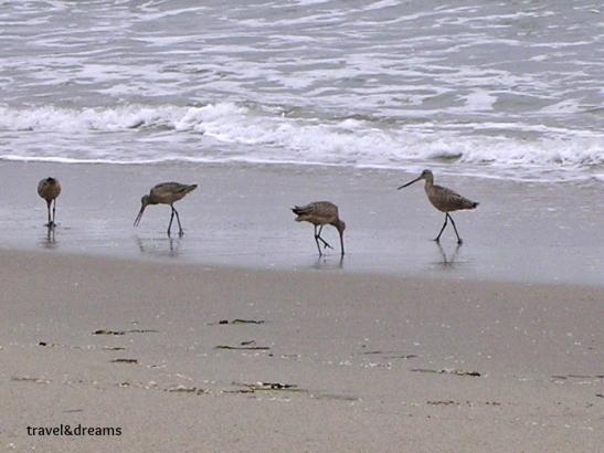 Point Reyes Wildlife Reserve. California