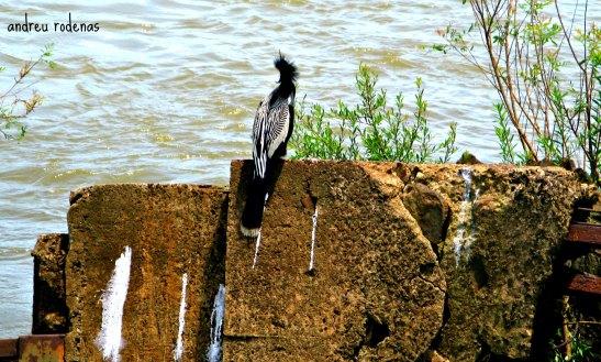 Parque Nacional de Iguazu / Iguazu National Park