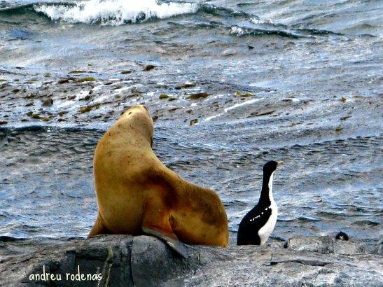 Isla de los Lobos. Tierra del Fuego / Wolves Island. Tierra del Fuego