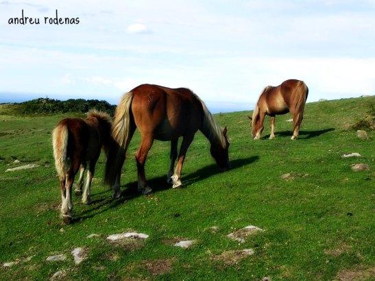 Monte Jaizkibel. Pais Basc / Mount Jaizquibel. Basque Country