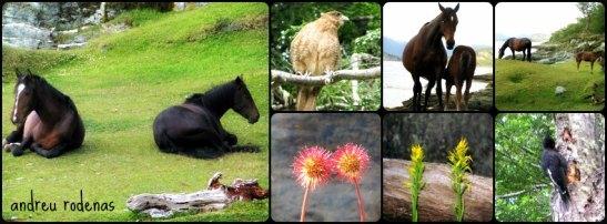 Fauna i flora del PN Tierra de Fuego /