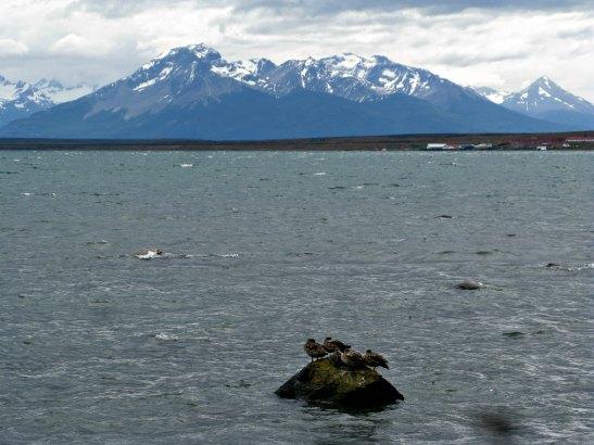 Seno Ultima Esperanza des de Puerto Natales / Ultima Esperanza fjord from Puerto Natales