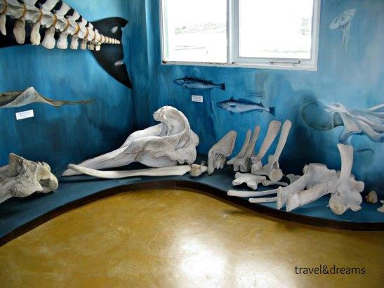 Museu Acatushun. Estancia Haberton/Acatushun Museum. Estancia Haberton